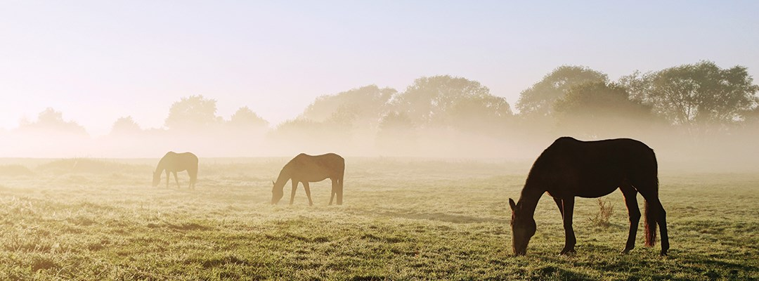 HOW SHOULD YOU FEED A HORSE WITH DIARRHOEA?